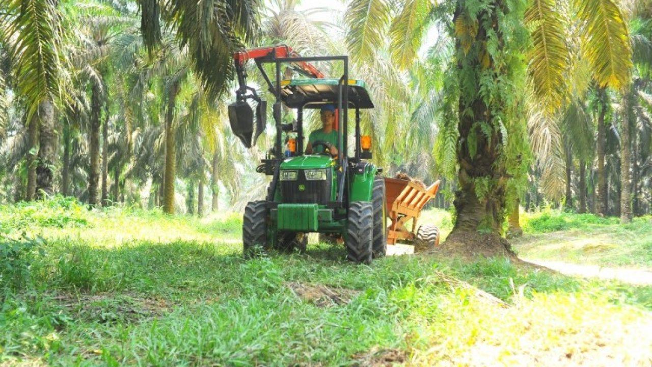 amdal kelapa sawit